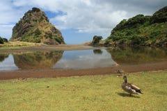 Lion Rock on Piha Beach, New Zealand Stock Photo
