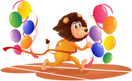 A lion running with colorful balloons Stock Photos