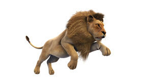 Lion running, wild animal  on white background Stock Photos