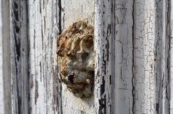Lion's head door emblem Stock Image