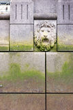Lion`s Head on Wall Stock Image