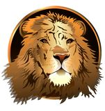 The lion's head on a white background. (Vector) Royalty Free Stock Images