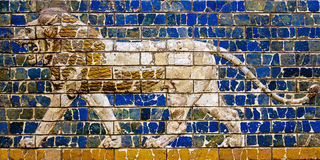 Lion's Roar and March. Image of a lion on the blue brick wall. Lions roar and march along the Gate of Ishtar royalty free stock images