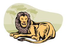Lion in the safari. Vector art of a lion royalty free illustration