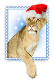 Lion in the santa claus hat Royalty Free Stock Photo