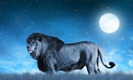 Lion on the savannah Stock Photo