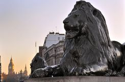 Lion Sculpture. At Trafalgar Square, London, England. With Big Ben in the background Stock Photo