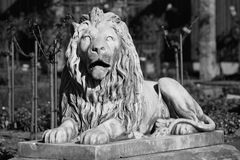 Life-sized stone statue of lion. Black-and-white photography of a lion sculpture made of stone. Decorative in the Royal Botanic Garden of Sydney, Australia Royalty Free Stock Photo
