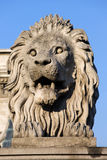 Lion Sculpture on Chain Bridge in Budapest Royalty Free Stock Photos