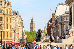 Lion Sculpture in Trafalgar Square. London, UK - June 6, 2016 -  Lion sculpture at the base of Nelson's Column in Trafalgar Square with Big Ben in the Stock Photo