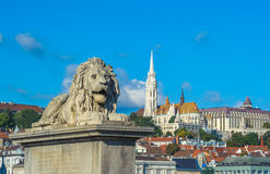 Lion sculptures of the Chain Bridge with the view of Budapest Royalty Free Stock Image