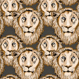 Lion seamless pattern. Vector illustration on brown background. Lion& x27;s heads looking straight seamless pattern. Vector illustration on dark brown background stock illustration