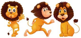 Lion set Stock Photo