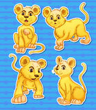 Lion set Stock Photo