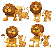 Lion set Royalty Free Stock Photo