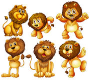 Lion set Royalty Free Stock Photography
