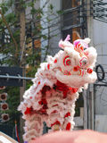Lion show happy chinese year. Lion show testing for happy chinese year at Thailand Yaowaratch Stock Image