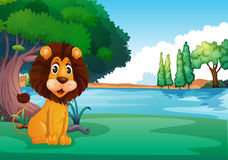 A lion sitting along the river Stock Photography