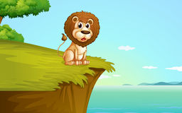 A lion sitting at the cliff Stock Photos