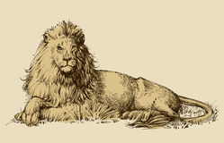 Lion sitting drawing Stock Photos