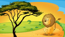 A lion sitting on raod Royalty Free Stock Photography