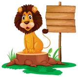 A lion sitting on a stump beside a wooden signboard Stock Photos