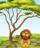 A lion sitting under a big tree Stock Images