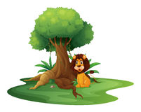 A lion sitting under the big tree Stock Photography