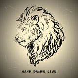 Lion sketch drawing on white background Royalty Free Stock Photography