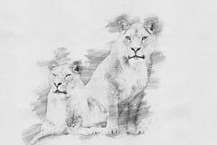 lion Skissa med blyertspennan stock illustrationer