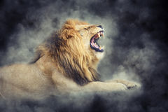 Lion in smoke on dark background Royalty Free Stock Image