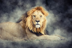 Lion in smoke on dark background Stock Photography