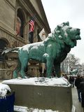Lion in a Snow Storm Stock Photo