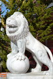 Lion sombre Photographie stock libre de droits