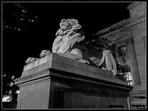 Lion sombre Photo stock
