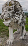 Lion sombre Photos libres de droits
