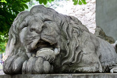 Lion somnolent Image libre de droits