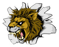 Lion sports mascot breakthrough Stock Images