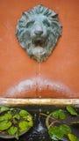 Lion spray Royalty Free Stock Image