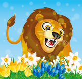 Lion and spring flowers. Royalty Free Stock Photo
