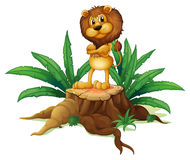 A lion standing above the wood Stock Image