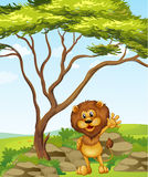 A lion standing beside a big tree Royalty Free Stock Photos