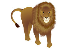 Lion standing. Royalty Free Stock Photography