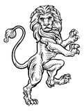 Lion Standing Rampant On Hind Legs Stock Photos