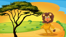 A lion standing on raod Royalty Free Stock Image
