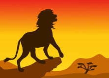 Lion. Standing on a rock in the savannah Royalty Free Stock Image