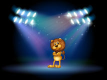 A lion standing at the stage with spotlights Stock Images
