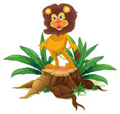 A lion standing on a stump with leaves Stock Images