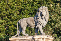 Lion statue in Brussels Royalty Free Stock Images