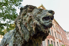 Columbia University Library - New York City. Lion statue on the campus of Columbia University in the City of New York Stock Images